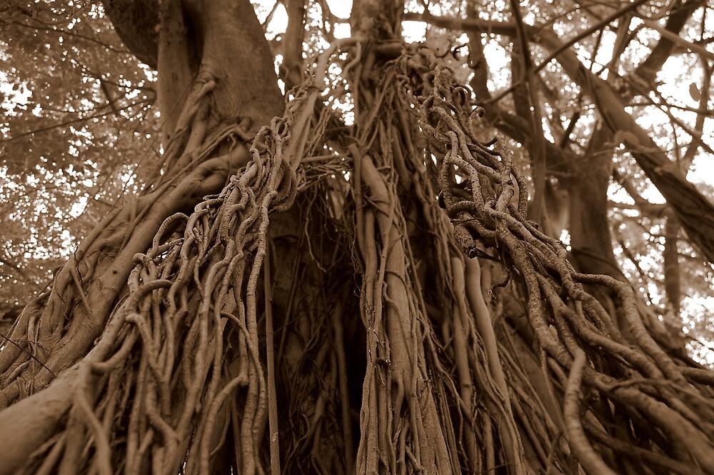 Bearing Roots by Simon Gottschalk