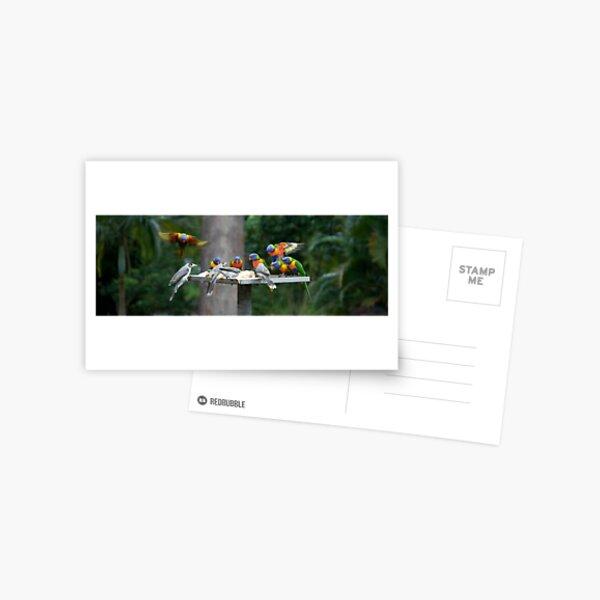 The Birds Postcard