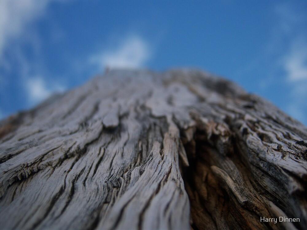 Looking Up. by Harry Dinnen