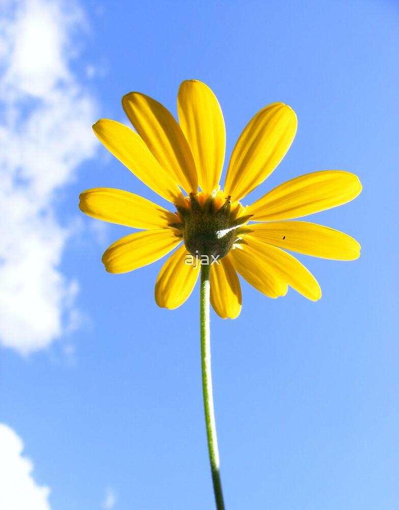 yellow daisy by ajax