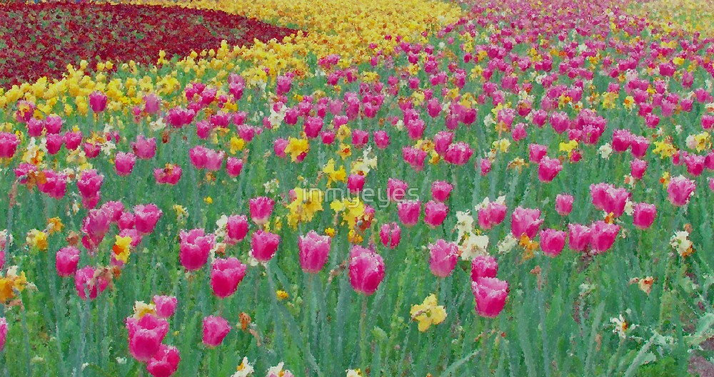 Field of Tulips by inmyeyes