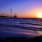 Seagull Sunrise by Judy Vincent