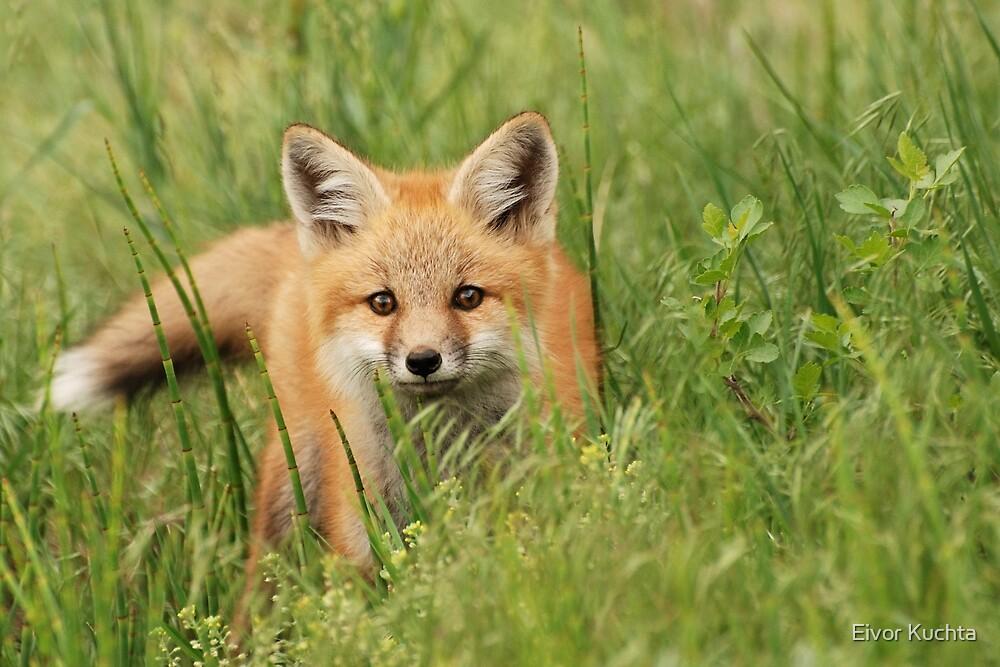Fox kit by Eivor Kuchta