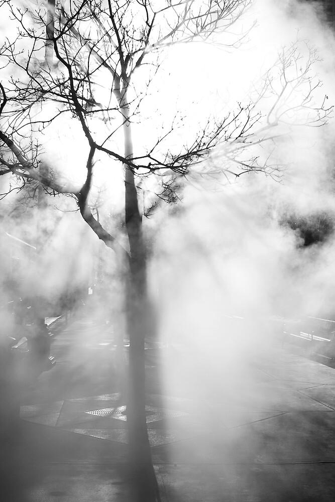 Steaming Tree by Armando Martinez