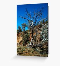Outback Flinders Greeting Card