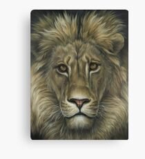 Lion African Wildlife Painting Canvas Print