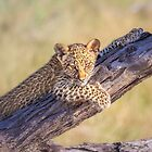 Leopard Cub's Beauty Shot by Owed To Nature
