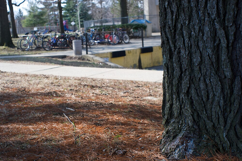 Tree Trunk by bawang