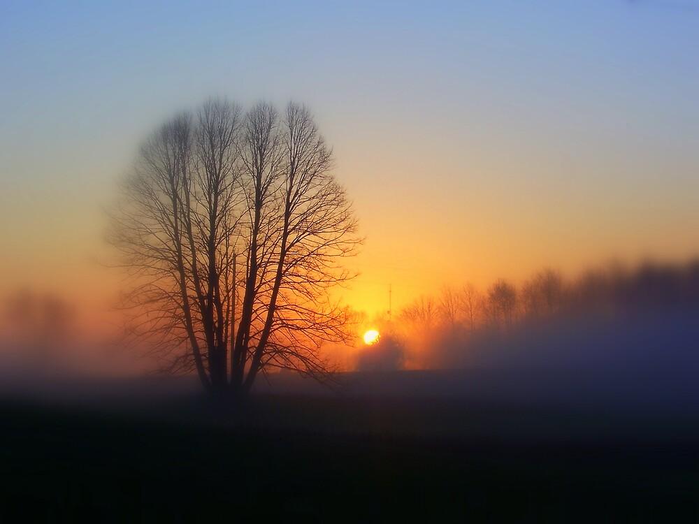 Beauty in the Fog. by babyangel