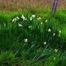 Wildflowers by Evita