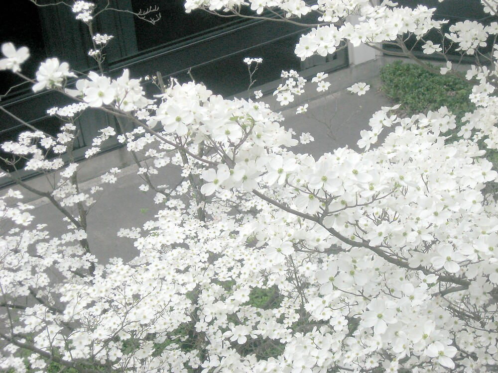 TC3 Flowering Tree by bljaromin