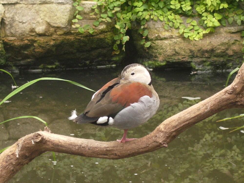 Resting bird by punkymonkey