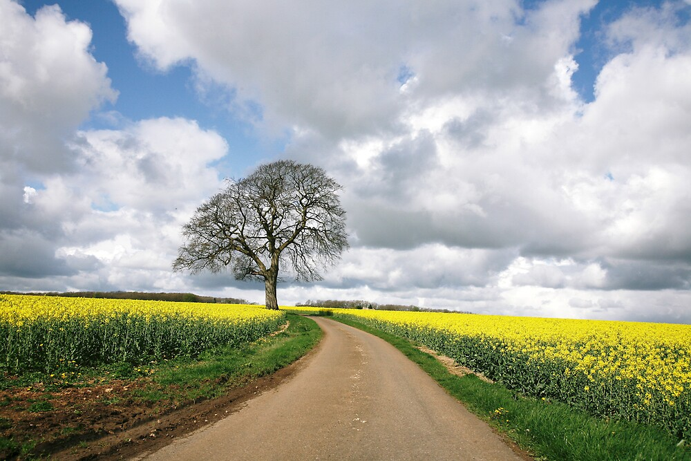 The rape field 2 by Jeff  Wilson