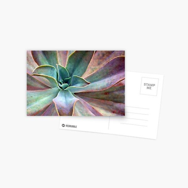Organic Beauty Postcard