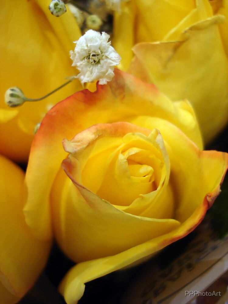 Yellow Roses by PPPhotoArt