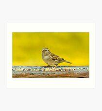 Just a Sparrow Art Print