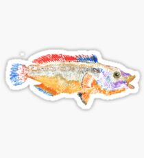 Gyotaku wrasse Sticker