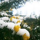 Snow flowers by Judi Rustage
