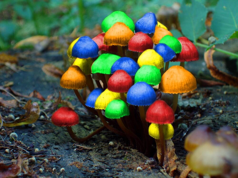 Color fungi by RLJe