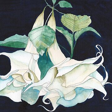 Original watercolour painting of White Spanish Lilies by esvb