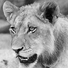 A georgous adolescent male cub!(Can rhinos hurt us mom?) by Anthony Goldman