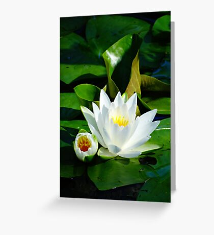 White Water Lily and Bud on Lily Pad Greeting Card