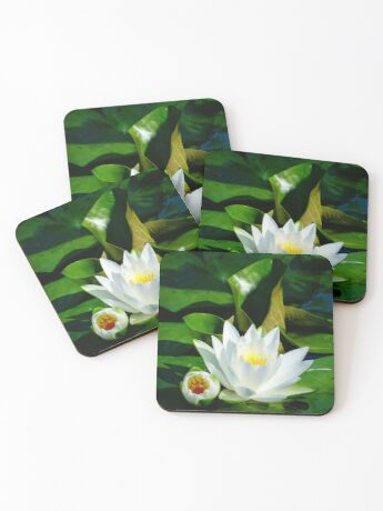White Water Lily and Bud on Lily Pad Coasters