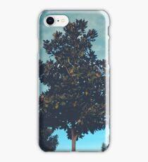 Cali Trees iPhone Case/Skin