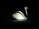 stone swan by Riko2us