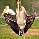 Thailand Bird by Coralie Plozza