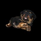 Cute Rottweiler Puppy Vector by taiche