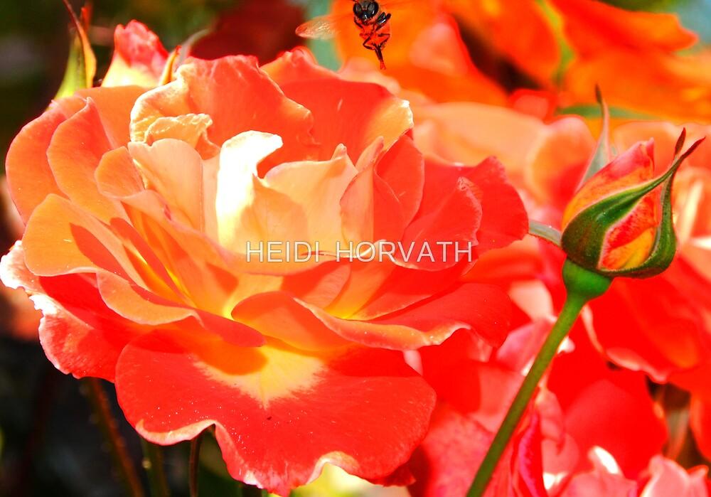 Rhapsody of BEE... by HEIDI  HORVATH