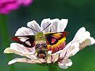 Hummingbird Moth by FrankieCat