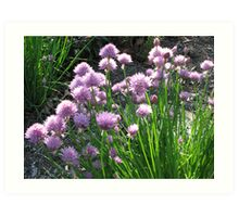 Chive Beds Art Print
