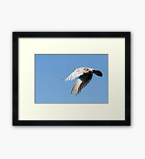 City pigeons in flight black and withe Framed Print