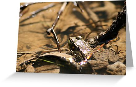 Frogger by Michael Kelly