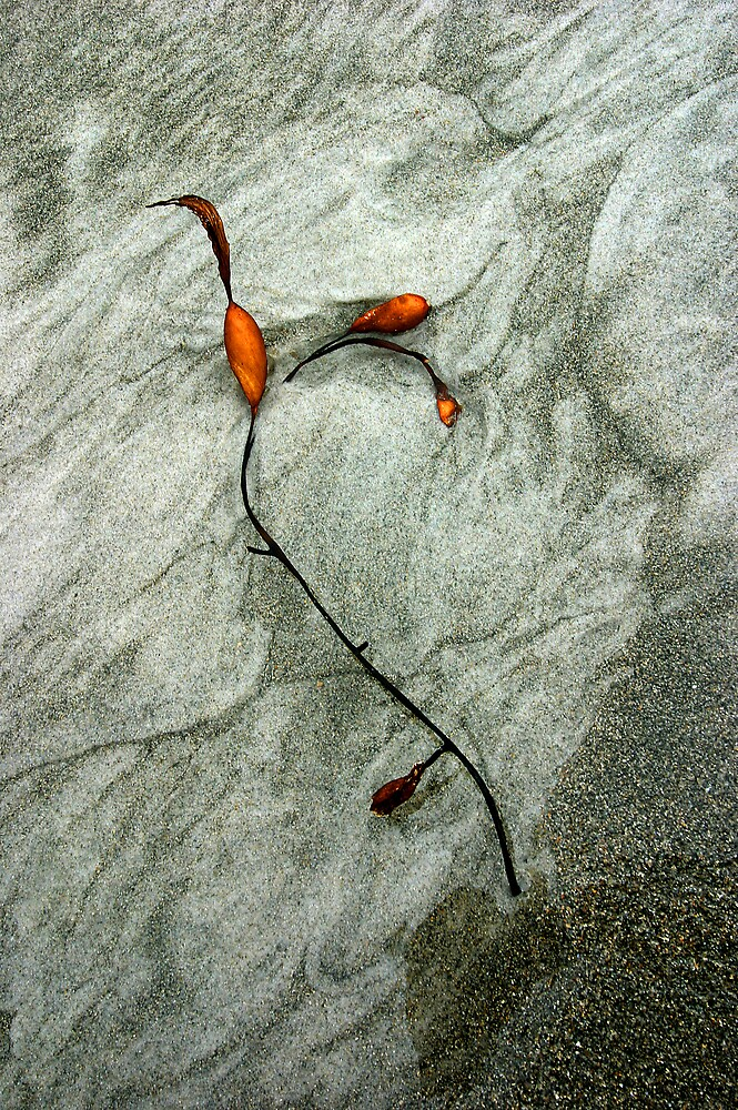 Bull Kelp Bladder by Mike Calder