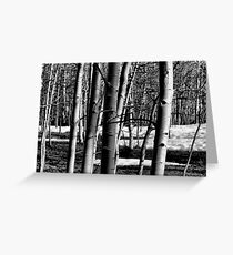 A Touch Of Winter Greeting Card