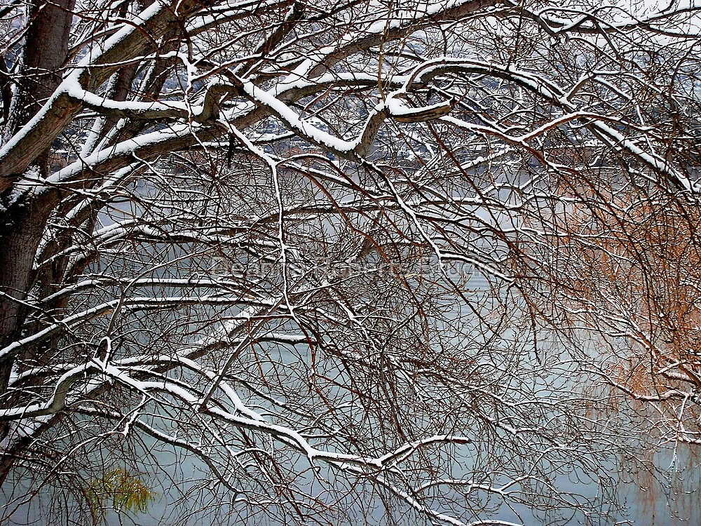 Snow Sticks - Queenstown, New Zealand by Deanna Roberts Think in Pictures