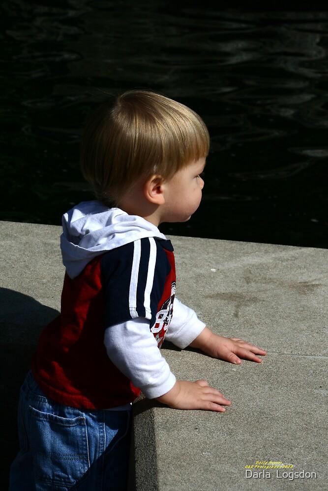 Watching the Ducks by Darla  Logsdon