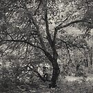 12.7.2017: Tree at the Garden of Oblivion by Petri Volanen