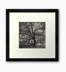 12.7.2017: Tree at the Garden of Oblivion Framed Print