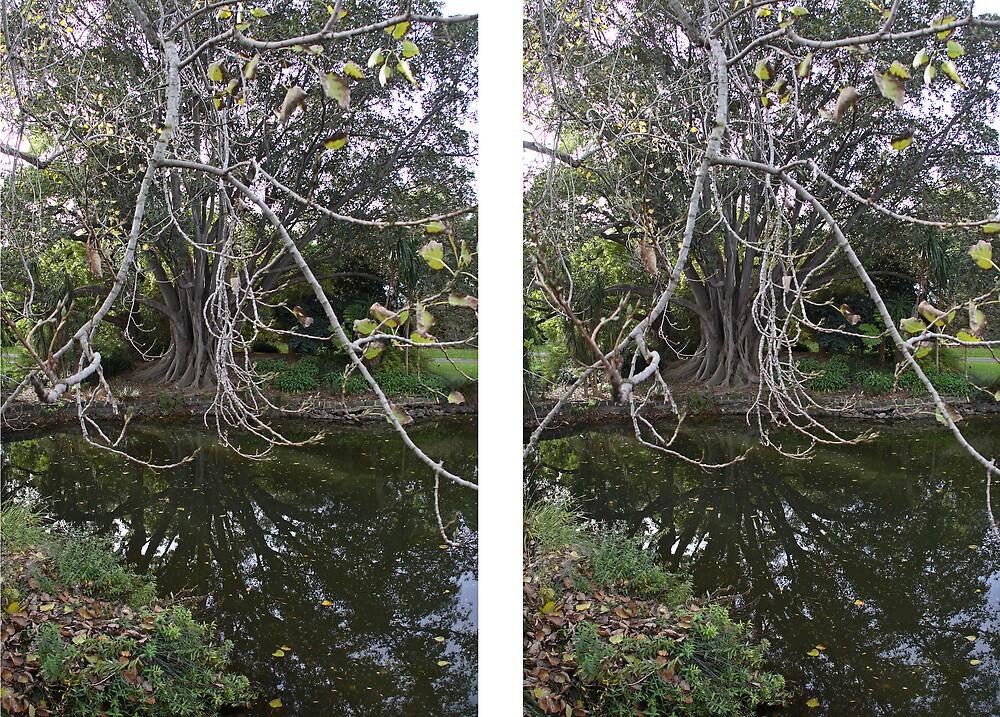 Stereo Image by Colin  Ewington