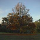 Autumn Tree by Tim Condon