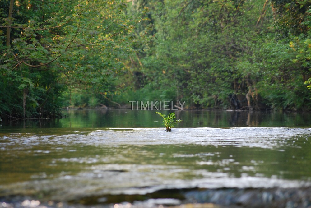 I WILL GROW by TIMKIELY