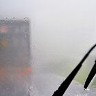 Terrifying: Looking Through A Glass Darkly: Monsoon, Borneo by Carole-Anne