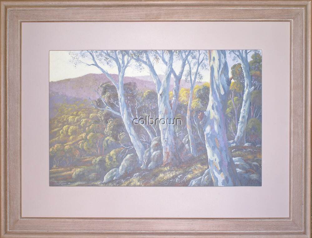 Mountain Gums by colbrown