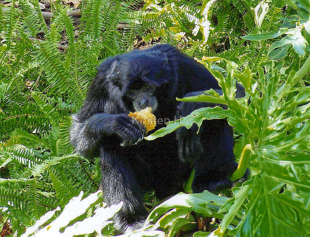 Monkey Feeding Time by Kirsten H