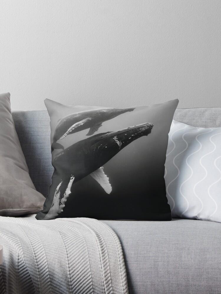 Humpback whales by Carlos Villoch