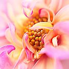 Coy by OpalFire